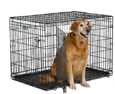Midwest iCrate Double-Door Folding Metal Dog Crate